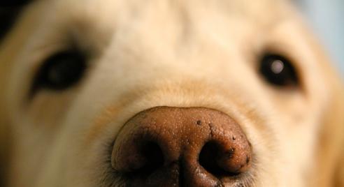 borrowmydoggydog